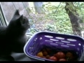 Охота на помидоры