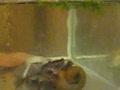 Чудовище в аквариуме!