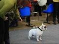 Выставка собак 12.12.2009