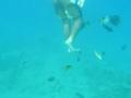 красное море. подводная камера
